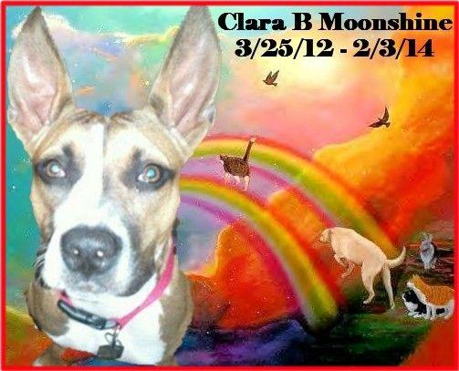 #OTRB #RAINBOWBRIDGE Beloved dog CLARA B. MOONSHINE crossed the #RB on 2/3/14 Loved & Missed xoxo
