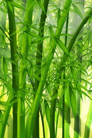 50 High Quality Retina Wallpapers For Iphone 4s Bamboo Wallpaper