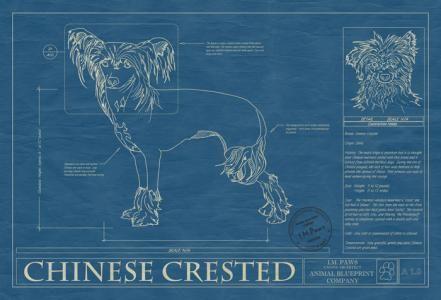 Animal blueprint company chinese crested dog print dog blueprints animal blueprint company chinese crested dog print malvernweather Gallery