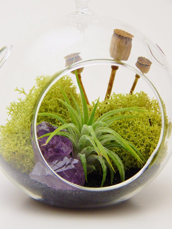 Amazon com : Air Plant Terrarium with Purple Amethyst