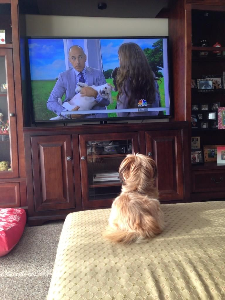 Lucy Jones Doncerhijones Watches Matt Lauer And Andrea Arden Discuss Animal Planet S Too Cute Series On Today 08 2 Animal Planet Funny Dog Photos Puppies