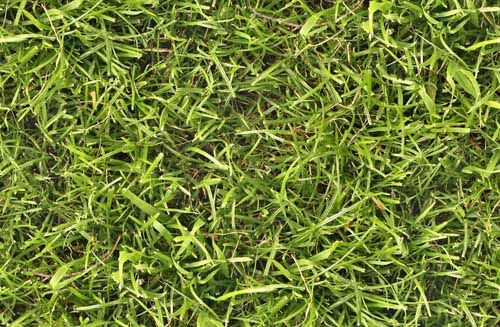 wild grass texture. 50 Free High Resolution Grass Textures For Designers Wild Texture