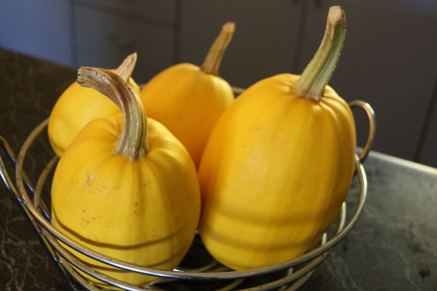 How To Tell When Spaghetti Squash Is Ripe And How To Ripen After Picking Squash Recipes Butternut Squash Recipes Growing Spaghetti Squash