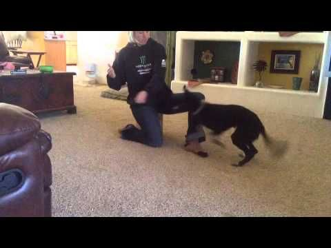 Teaching Your Dog To Jump In Your Arms Youtube Agility