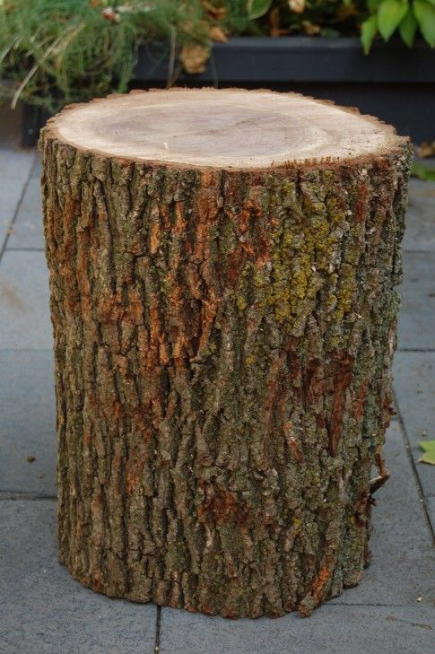 Stumped How to Make a Tree Stump Table