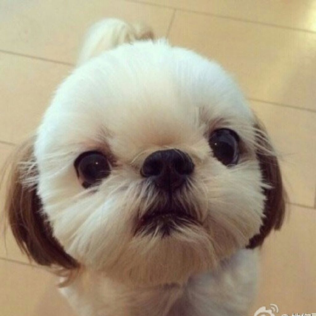 17 Best Images About Pins For Pets On Pinterest: The Friendly Fur : Top 10 Best Hypoallergenic Dog Breeds