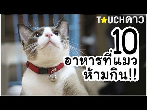 10 อาหารท ห ามให แมวก นเด ดขาด Youtube ส ตว เล ยง