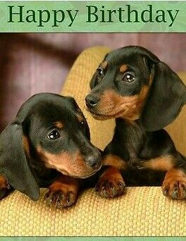 Best Non Indian Dogs Breeds To Own In India Dachshund Puppies