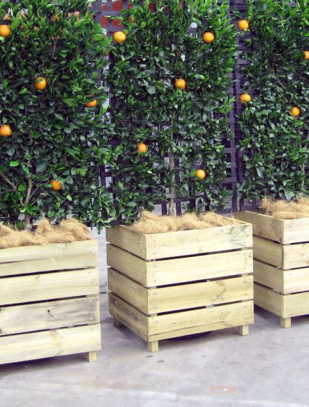 Espaliered fruit trees in wooden boxes if these were on for Pallet wall on wheels