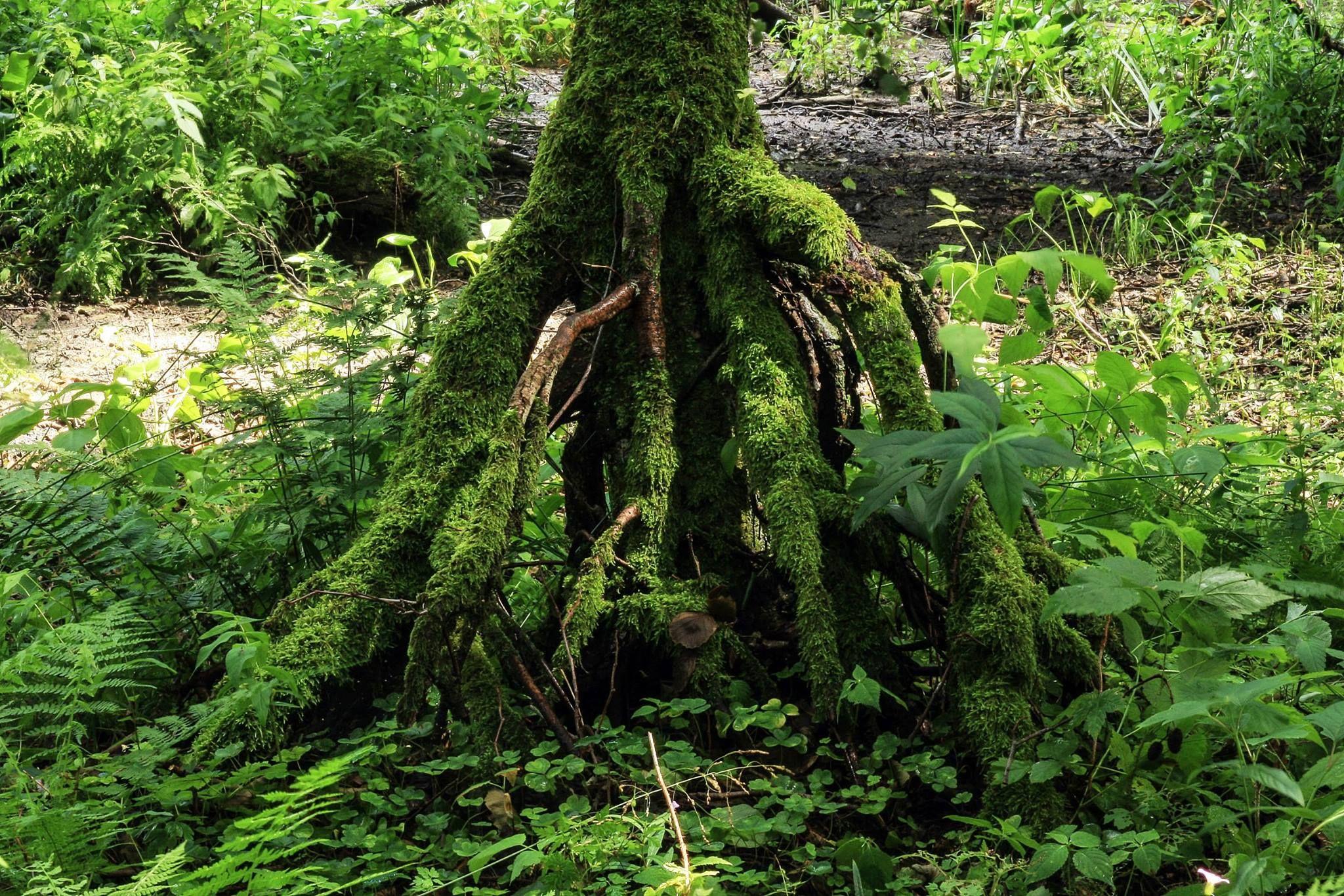Aquascaping inspiration ... #moss