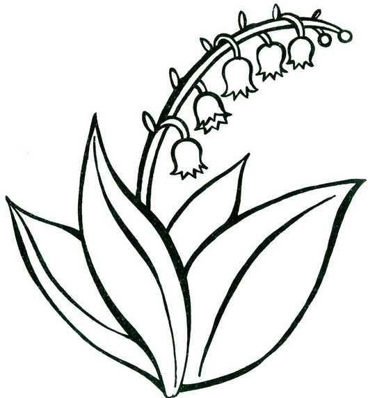 Картинки по запросу контуры цветов одуванчик | Цветы ...