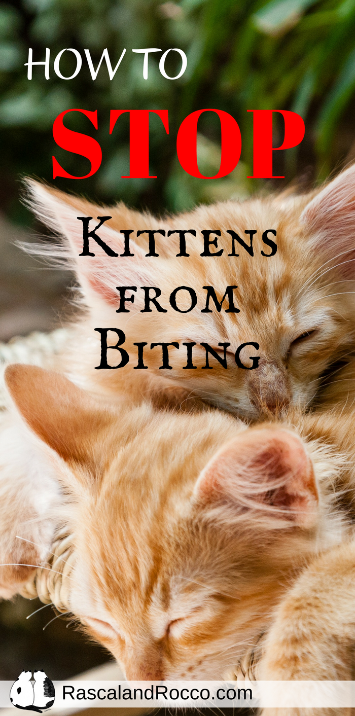 How To Stop Kittens From Biting Cat Behavior Kitten Biting Cat Training
