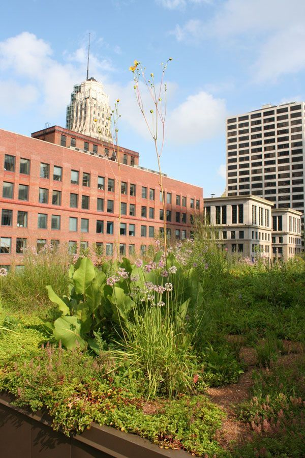 Chicago City Hall Green Roof by Atelier Dreiseitl ARQ / Landscape