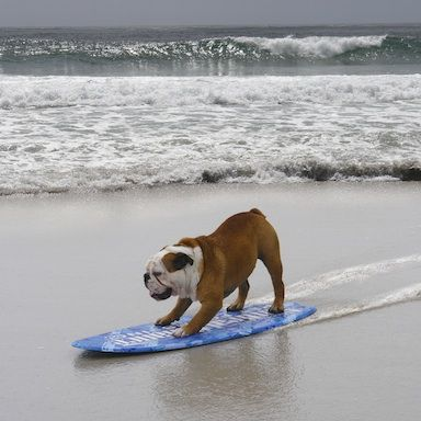 Pin By Lisa On The Sand Between My Toes Dogs Hallmark Channel Animals Beautiful