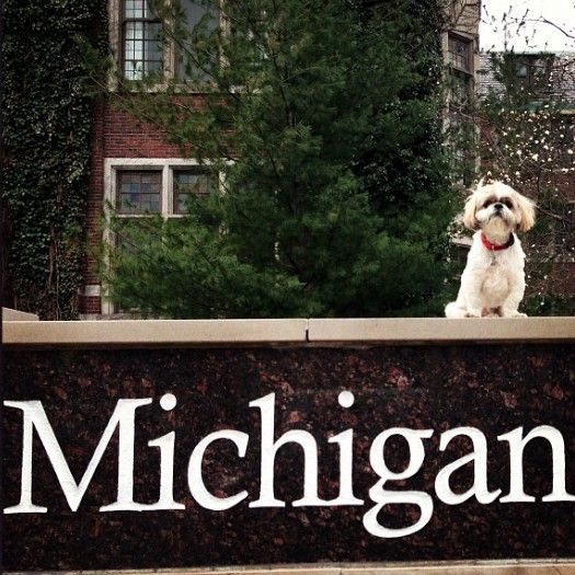 Puppy At The Union University Of Michigan Michigan Go Blue
