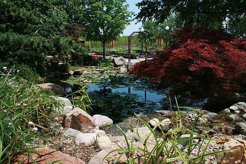 Pond And Waterfall At Lanoha Nurseries