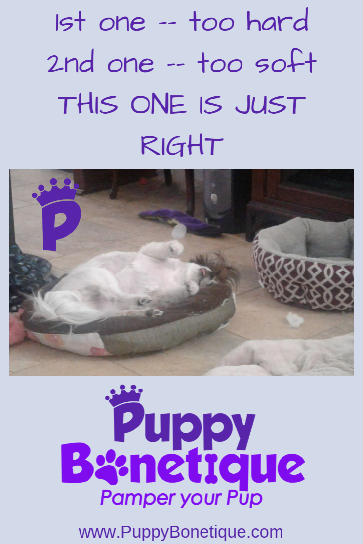 For those pampered pups check out puppybonetique today