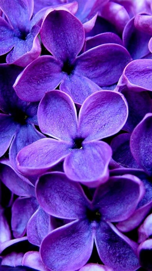 Purple Flowers Iphone Wallpaper Background With Images Purple