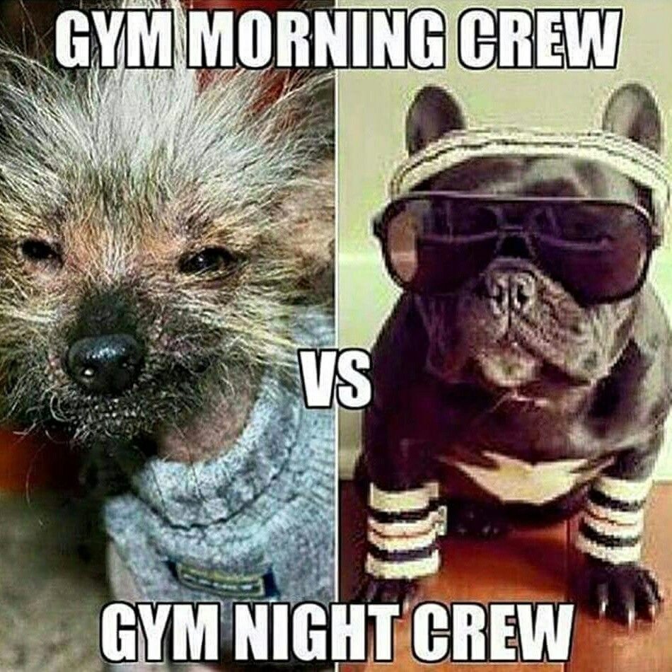 Morning crew | Gym memes funny, Workout humor, Morning gym