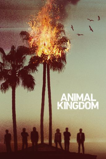 Assistir Animal Kingdom Online Dublado Ou Legendado No Cine Hd