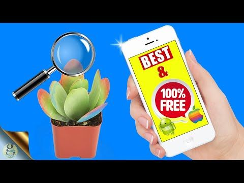 UNBELIEVABLE FREE PLANT IDENTIFICATION APP GOOGLE LENS