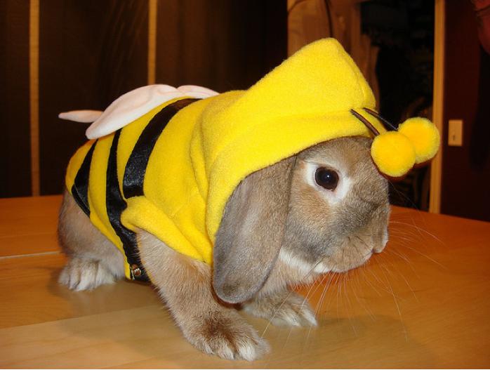 bunnybee Pets in costume Pinterest Bunny, Animal