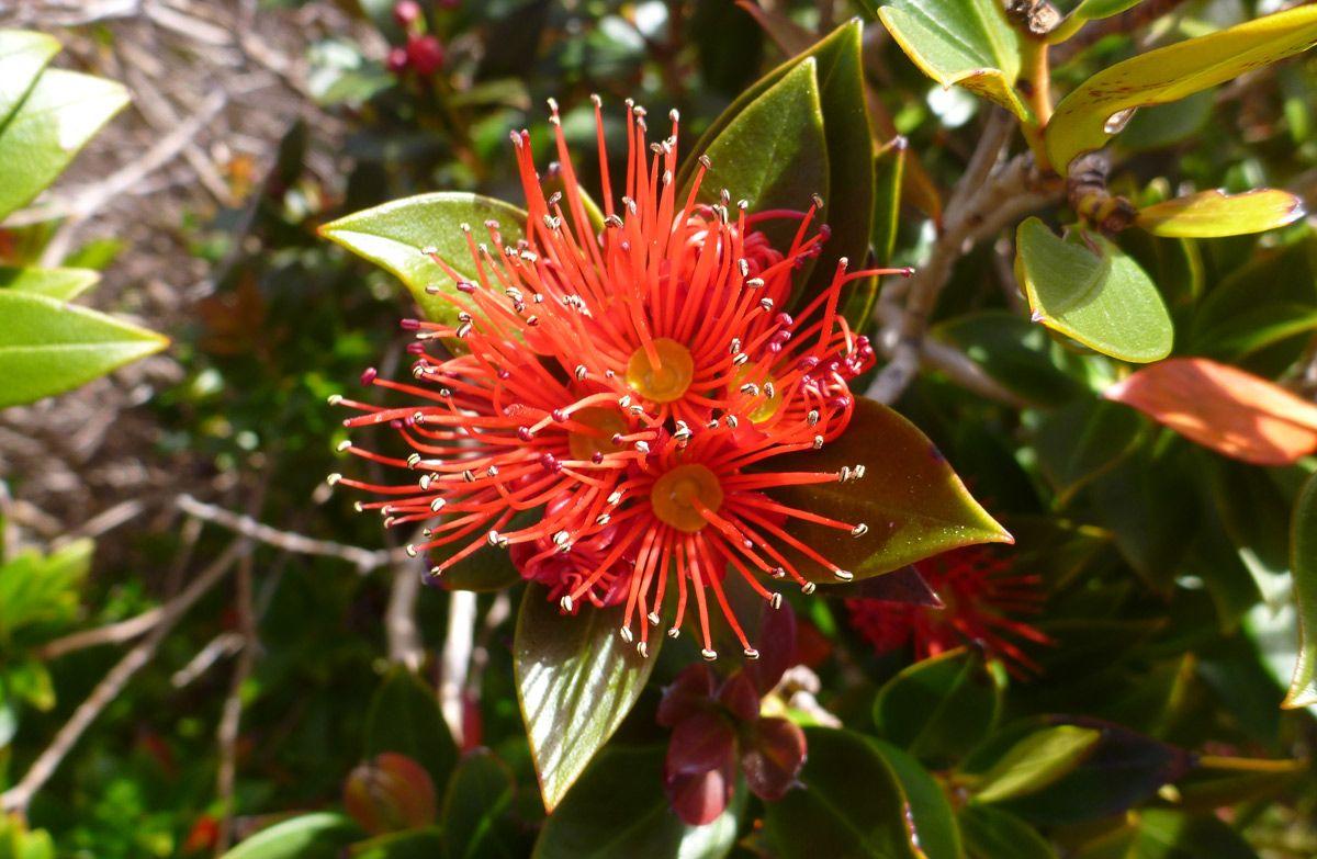 native plants of new zealand