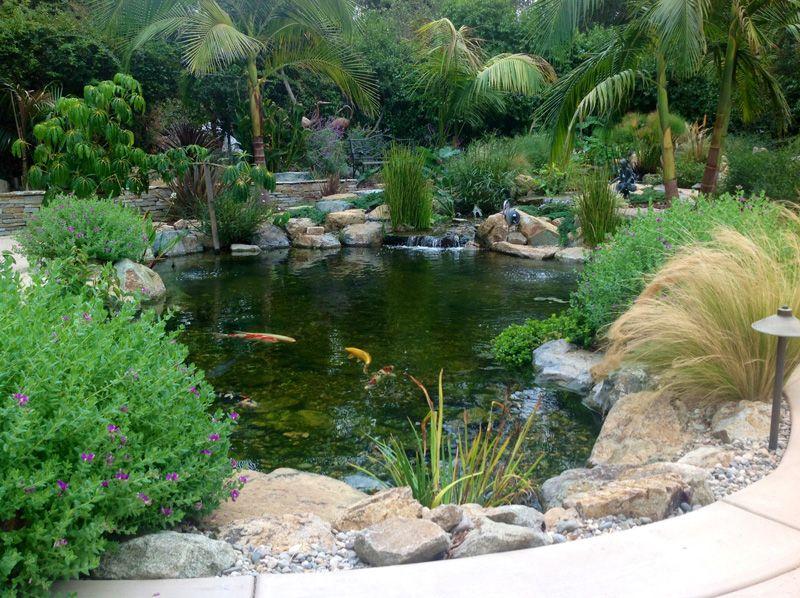 Amazing Vista Pond By San Diego Pond