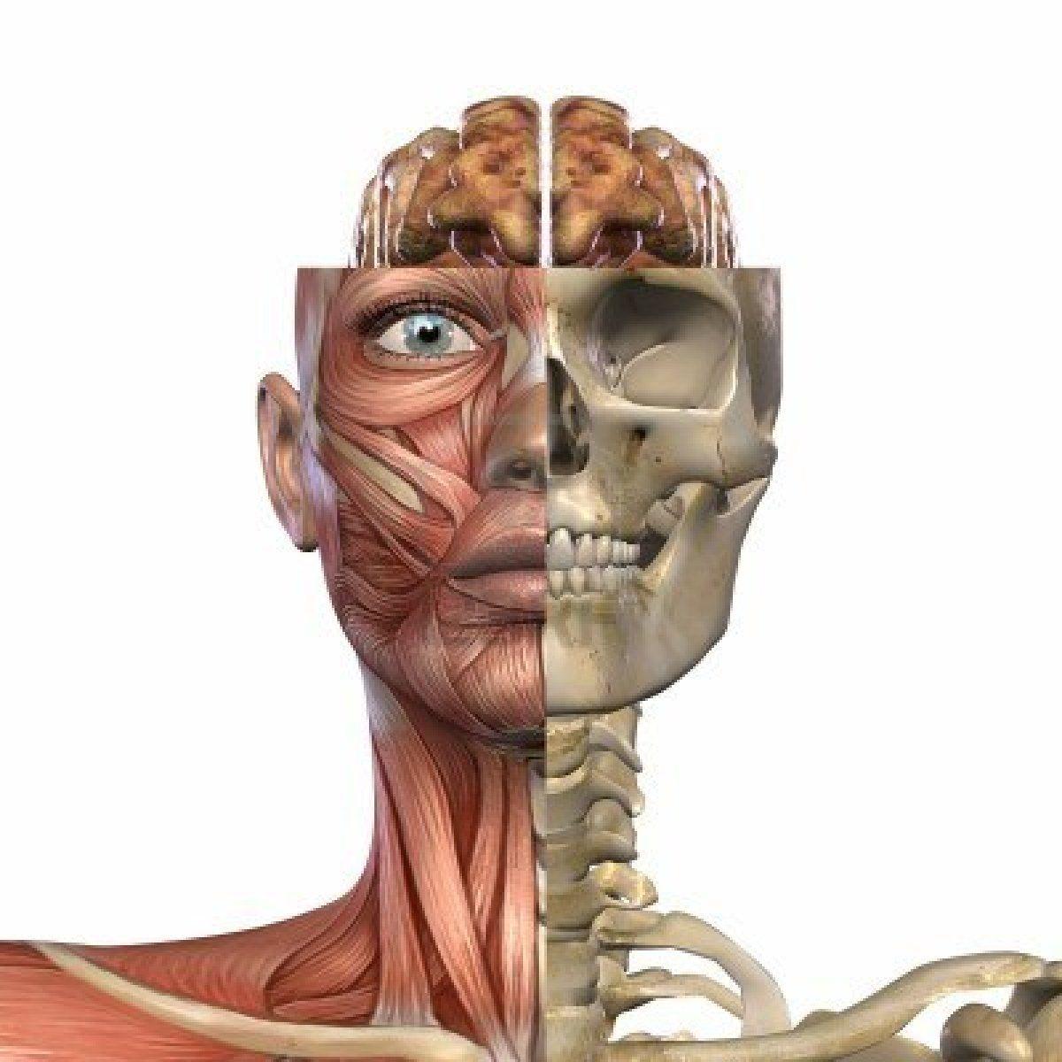 Naturaclass Online: Anatomía y Fisiología Humana | ANATOMIA ...