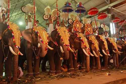 decorated elephants   African elephant, Elephant, Mandala ... - photo#8