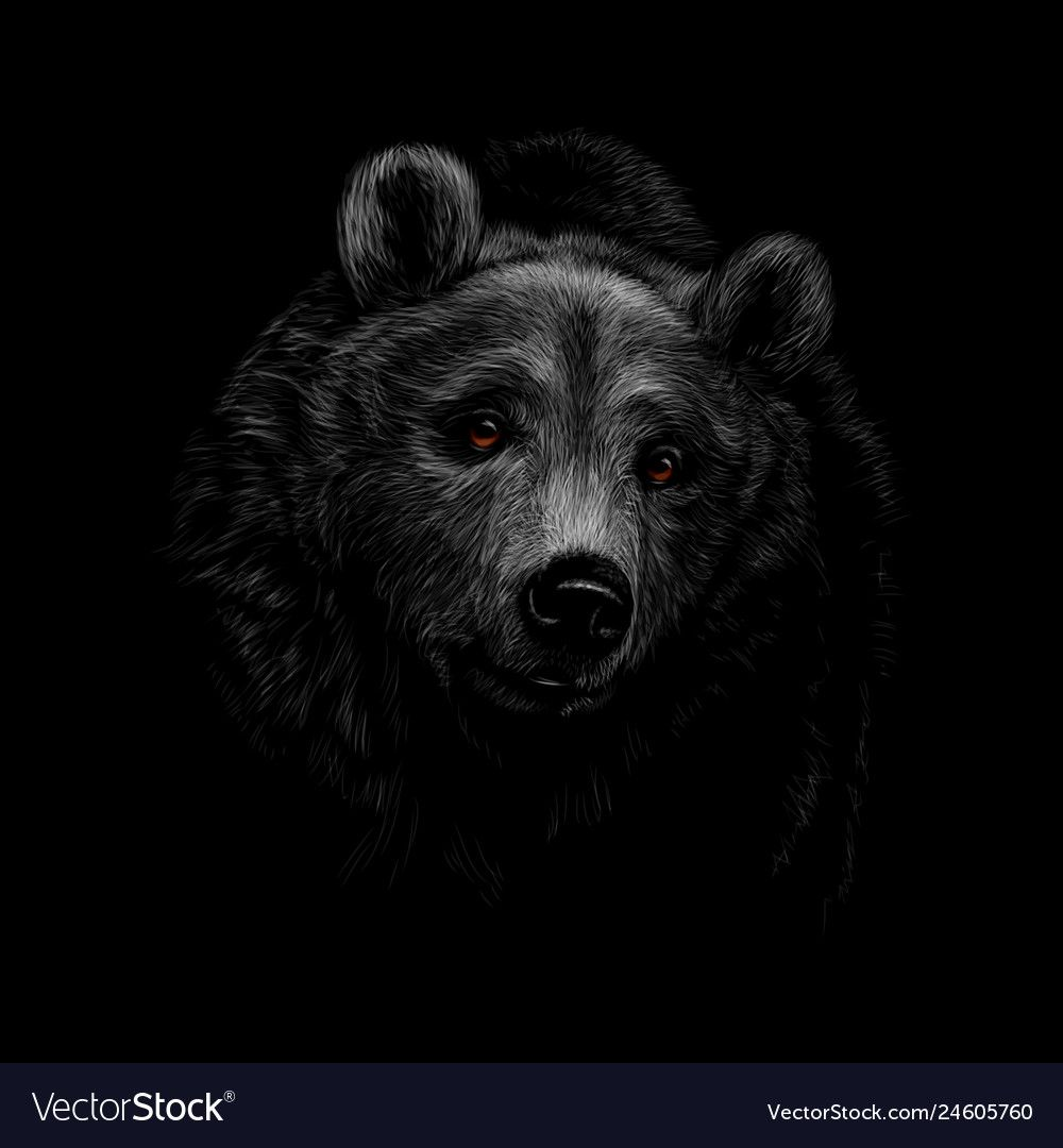 Portrait Of A Brown Bear Head On A Black Background Vector Illustration Download A Free Preview Or High Quality American Black Bear Black Bear Canvas Prints