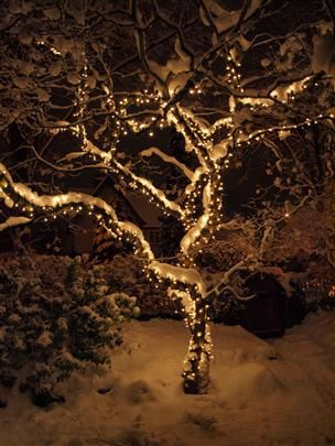Outdoor Christmas Tree Lights Uk: 17 Best images about Japanese garden Orton St on Pinterest | Gardens,  Lighting and Olympia,Lighting