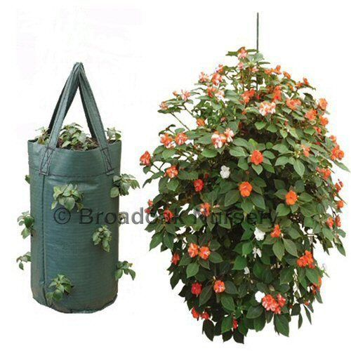 strawberry planter bags