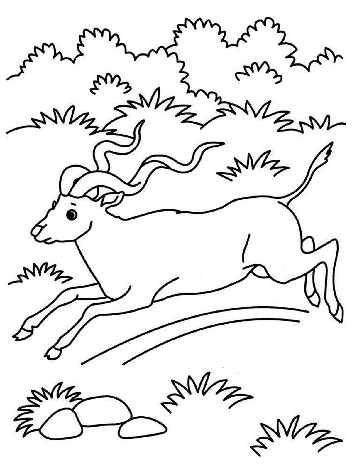 Antelope Running Kids Animal Printable Coloring Pages Desert Animals Coloring Animal Coloring Books Animal Coloring Pages [ jpg ]