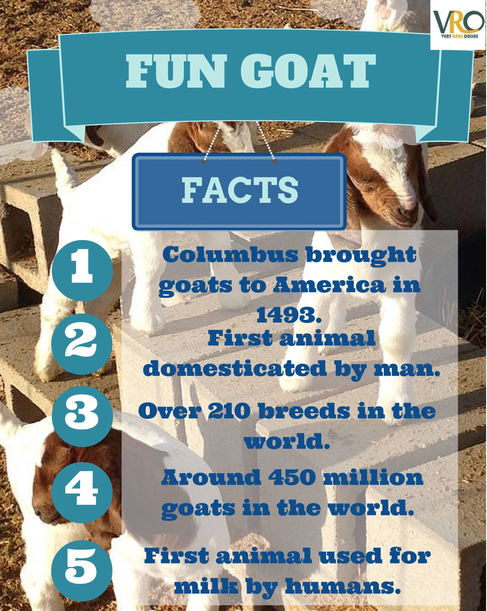 Some Of The Amazing Fun Facts About Goat Milk