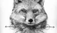 Black and Grey Fox