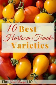 The Best Heirloom Tomato Varieties To Grow This Year 400 x 300