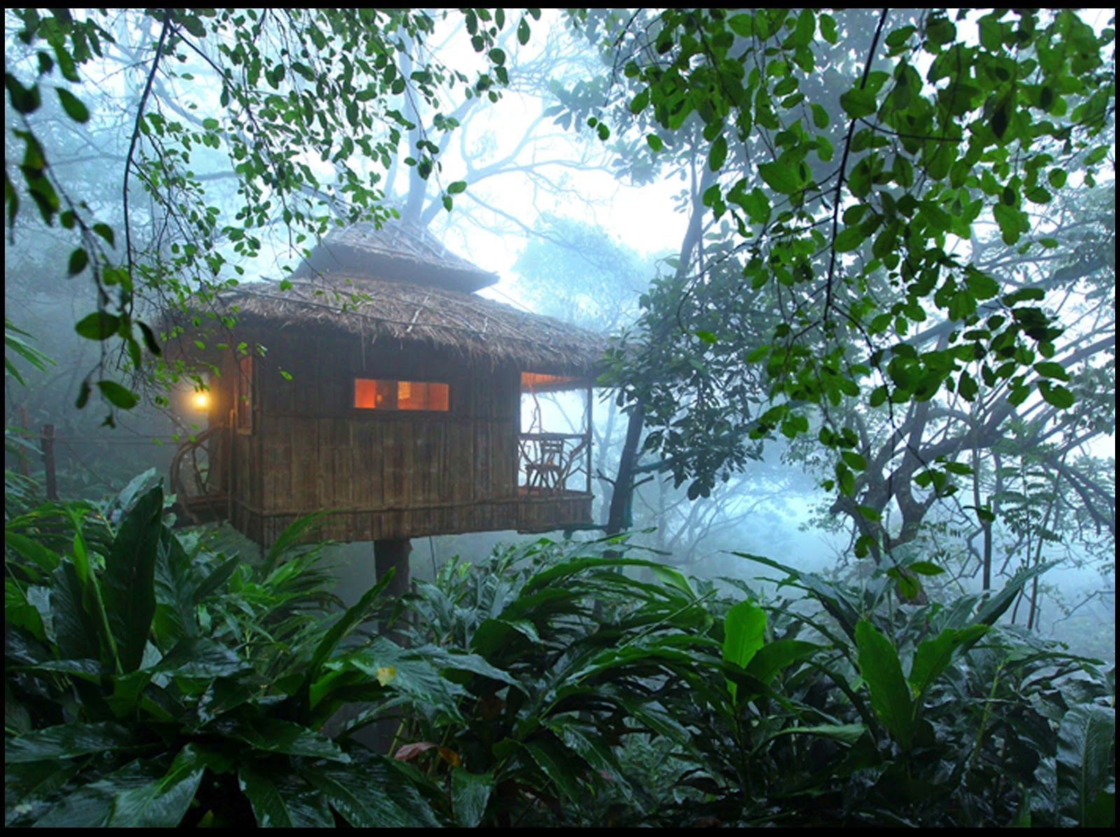 Uncategorized Houses In The Jungle honeymoon in treehouse celebrate your keralain jungle tree