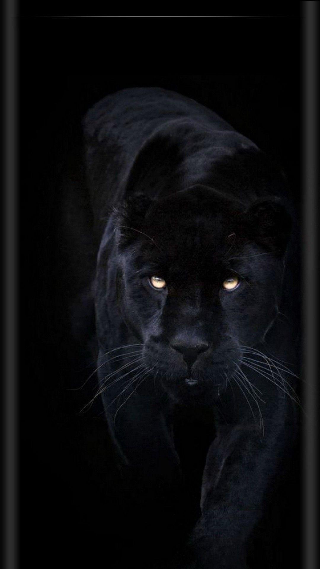 Обои Чёрная. Животные foto 8