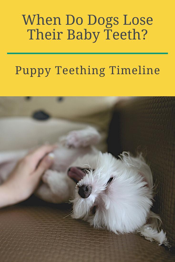I Love Puppy Teeth Animales Adorables Mascotas Animales