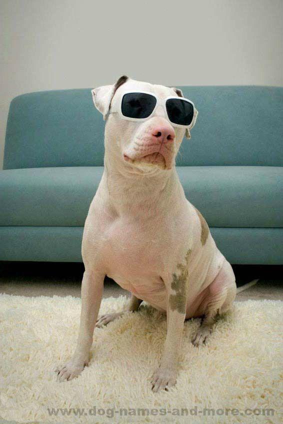 female pit bull names unique ideas for your girl pitbull pit bull