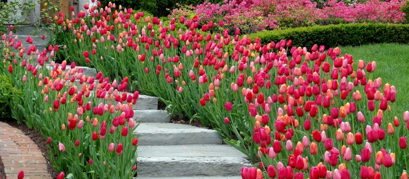 love the look of flowers along the walkway!