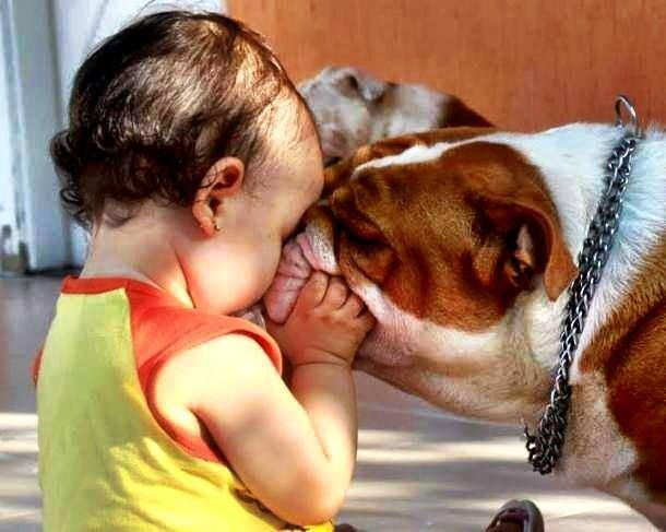 Bulldog and baby smooches.