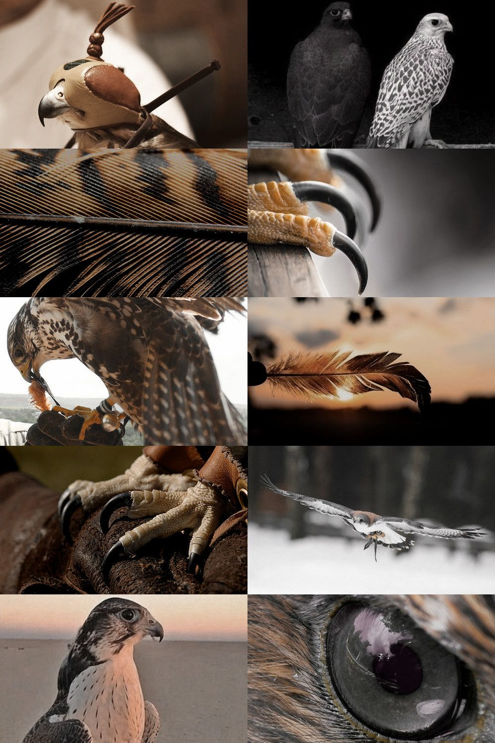 Falconry The Sport Of Hunting With Falcons Or Other Birds Of Prey The Keeping And Training Of Such Birds Birds Of Prey Falconry Hummingbirds Photography