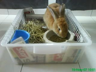 1000+ images about pet rabbit litter boxes on Pinterest | Pets ...