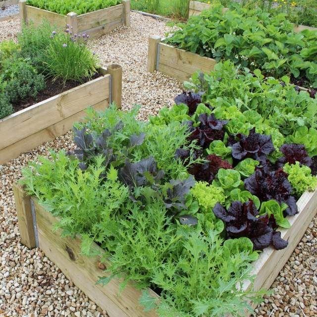 hochbeete bauen holz dielen gemüse blattsalat pflanzen | garten, Garten und Bauen