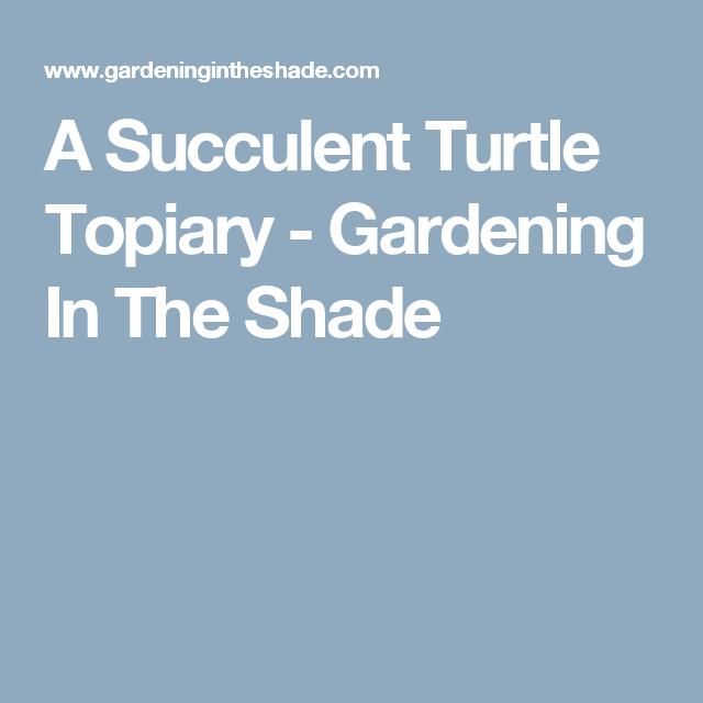 A Succulent Turtle Topiary - Gardening In The Shade