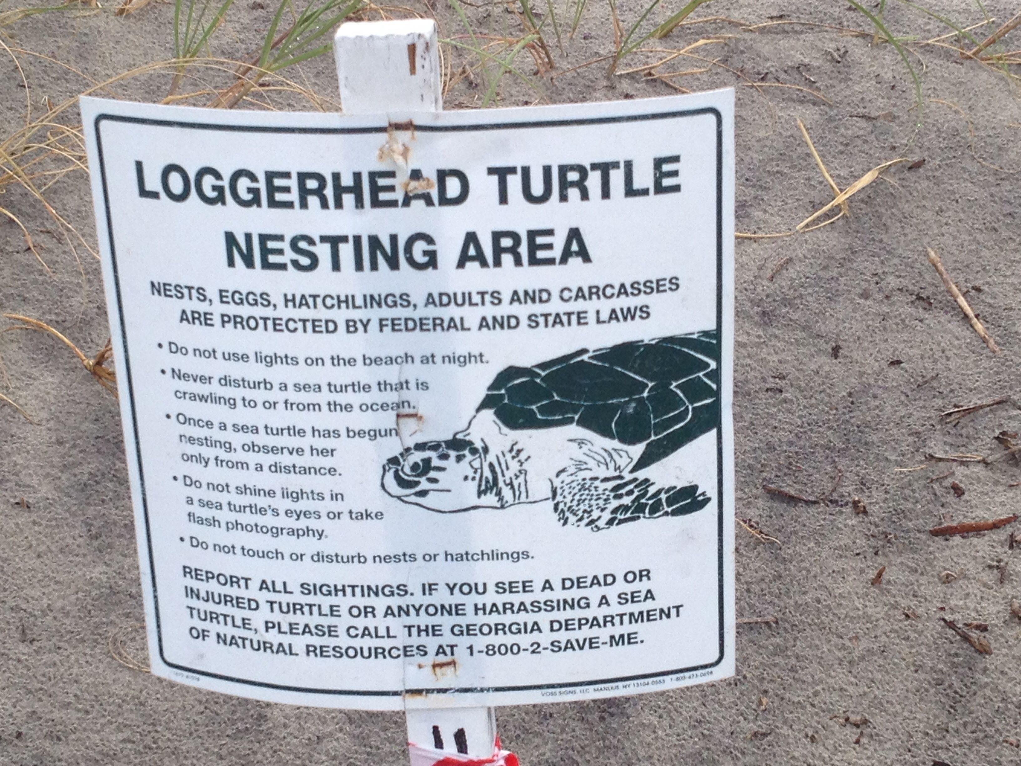 Marker Sea Turtle Nest Jekyll Island Ga Sea Turtle Nest Jekyll Island Loggerhead Turtle