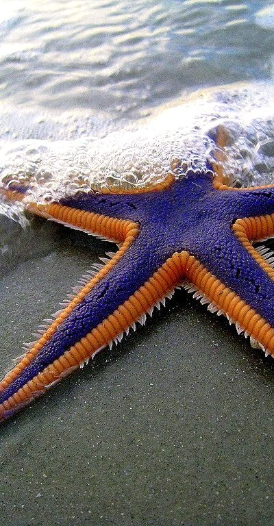 It's a Knicks starfish! there must be one for the Lakers ;)