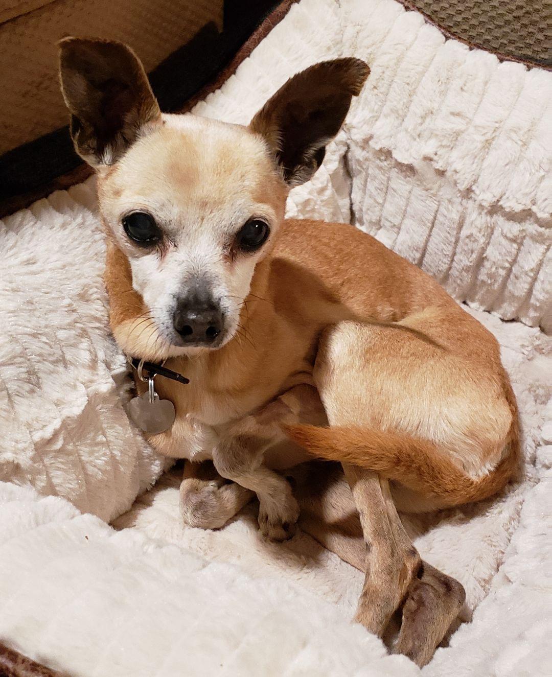 Adopt Charlie on Petfinder